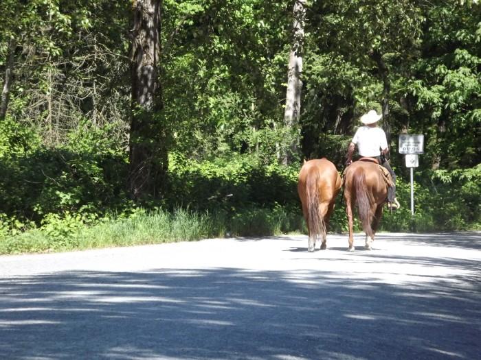 Vedder Trail Horses