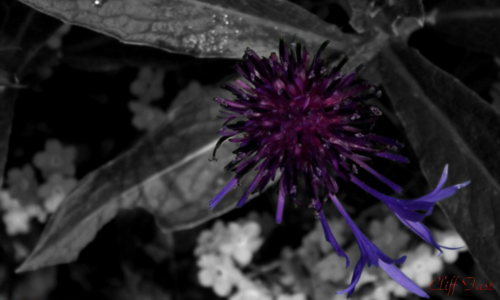 Selective color