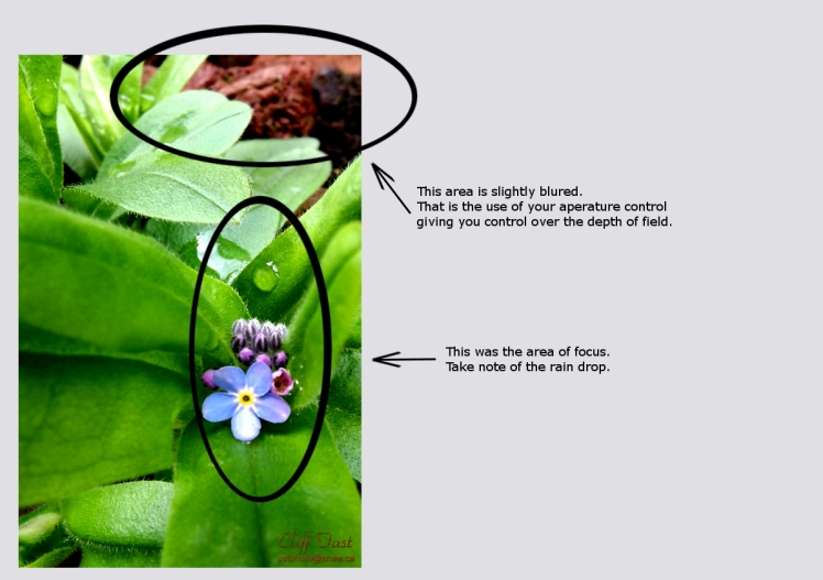Showing the depth of field and the focus area.