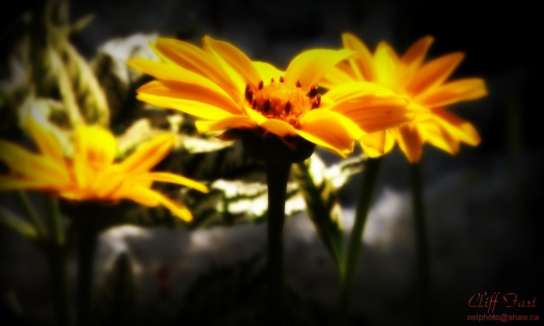 Beauty in a yellow flower