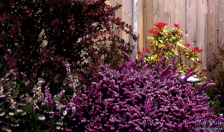 A garden photo