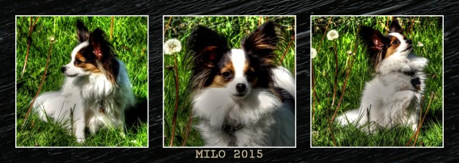 Milo 2015 (10x28)