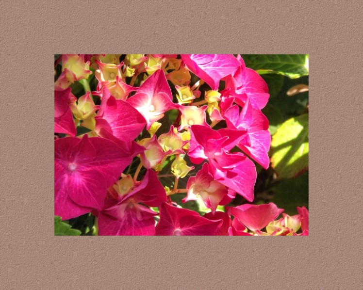 A Red Rhododendron with a compimentry colored boarder