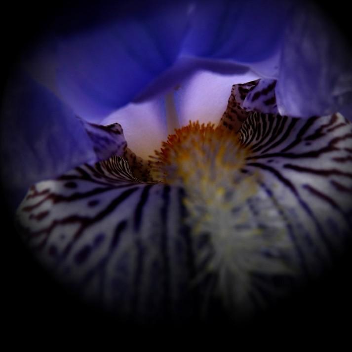 Iris-1b