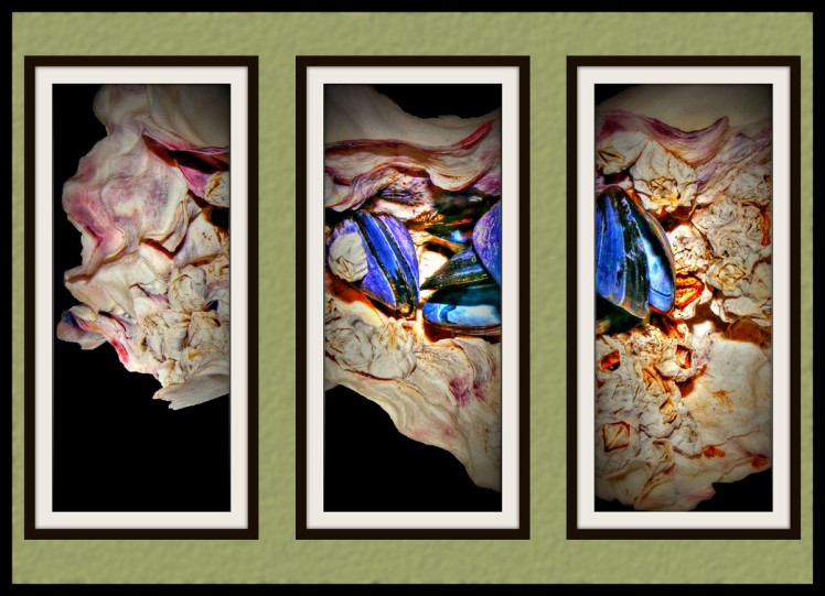 Three 10x24 photos of an oyster shell as the may look on the wall