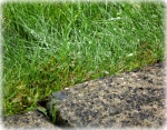 A nice shot of dew drops on grass with a cement block cutting across the corner of the photo.