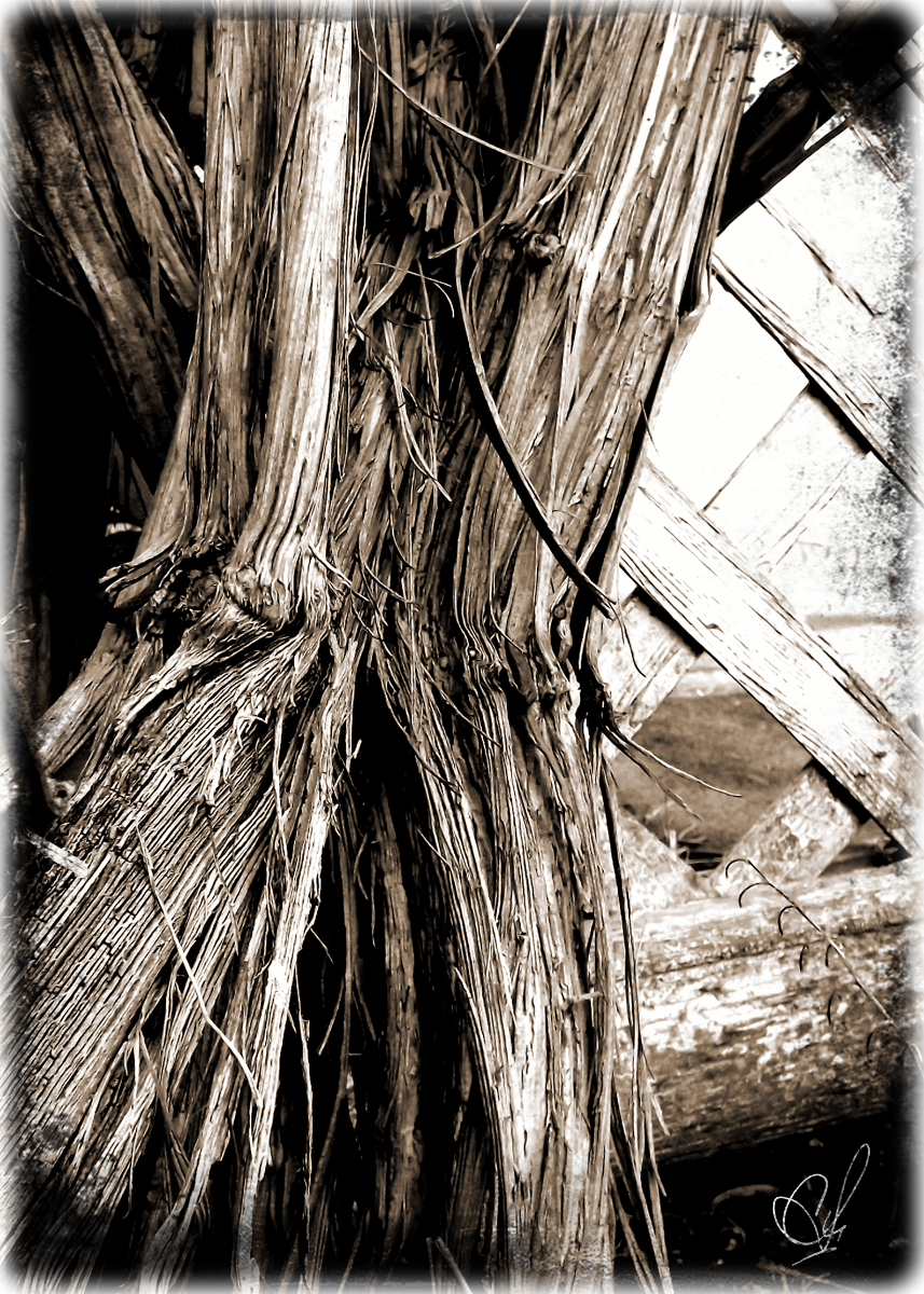 "A shot of the base of a vine in the ""Sepia"" tone."