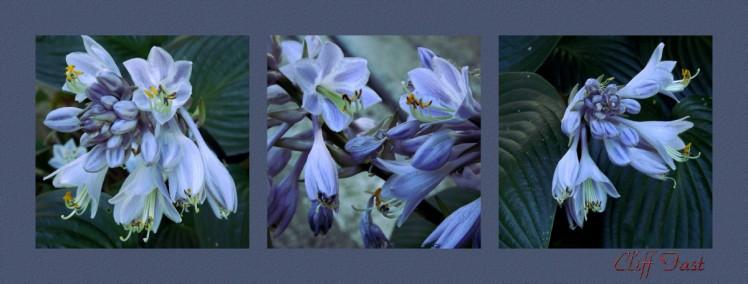 Floral-1