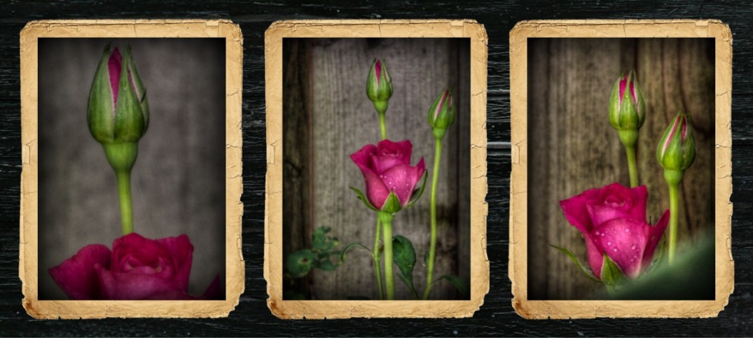 """2015 Rosesx3-1 Here at OST, we celebrate beauty with very special people every day. People just like you. In particular, """"Wall Art"""" with only you in mind. """"Archival Prints"""" or """"Canvas Giclees"""" are both available and printed on the highest quality papers and canvas. Pick a theme you would love to see grace the walls of your """"office, boardroom, lobby, bedroom, dining area, nursery…"""" You get the picture. (no pun intended)"""