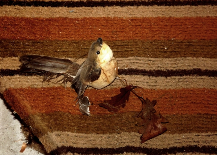 Is this bird dead?